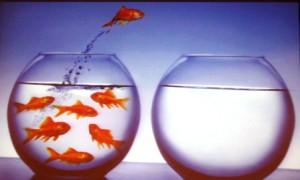 peces mirai hidrogeno craig scott toyota eeuu www.pruebautos.com.ar